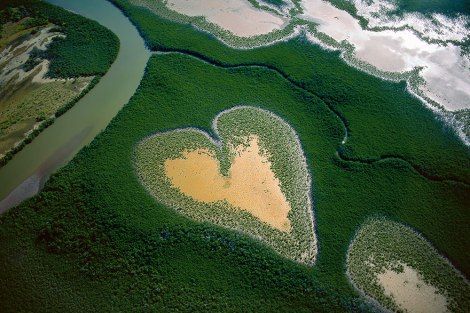 Mangroves, New Caledonia