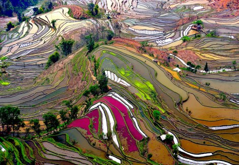 Terraced Rice Fields, China